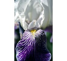 Smiling Iris Photographic Print