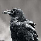 Raven.2 by Alex Preiss