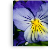 Pansy Afternoon Canvas Print