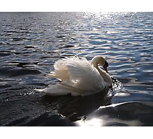 swan on a lake Photographic Print