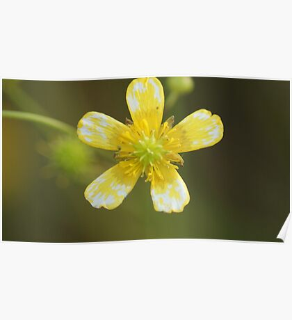 White and Yellow Flower. Poster