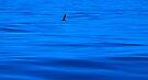 The Deep Blue Sea by Odille Esmonde-Morgan