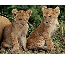 Out of Africa - Sibling Cubs Photographic Print