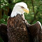 Eagle by Michelle Callahan