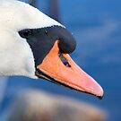 Swan by Michelle Callahan