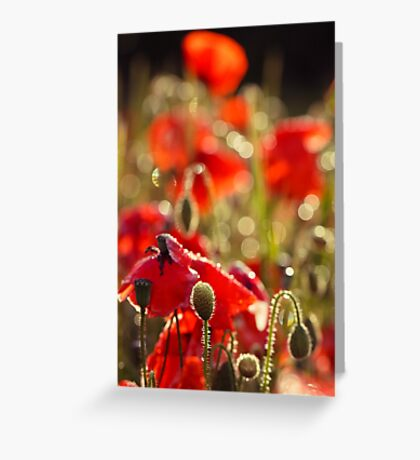 Sunday Morning Poppykeh Greeting Card