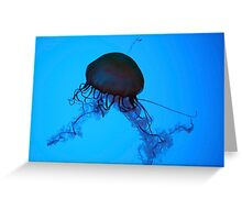 Sea Nettle Greeting Card