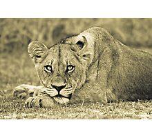 Lioness - Okavango Delta, Botswana Photographic Print