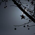 Autumn's Last Star by ShotsOfLove