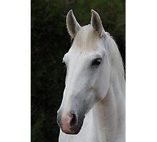 Horse 9012 Photographic Print