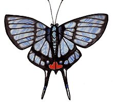 Butterfly Series 07 by Jazmine Phillips