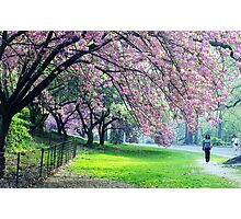 Cherry Blossoms, Central Park Photographic Print