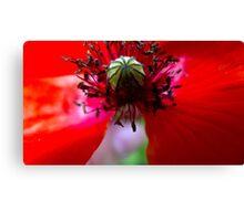 Red poppy flower detail Canvas Print