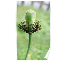 Closeup Flower head without petals Poster