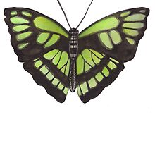 Butterfly Series 08 by Jazmine Phillips