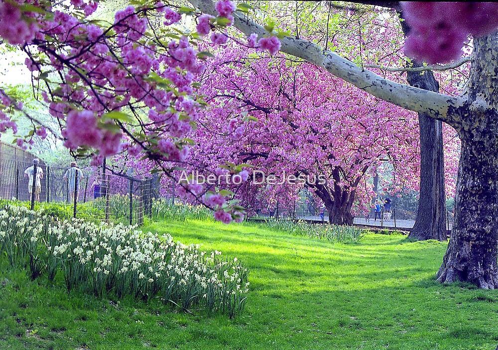 Spring in Central Park by Alberto  DeJesus