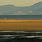 Late Sun at Marahau by Liz Davidson