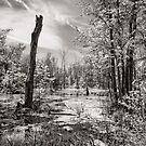 Wetlands                                         by Steve Silverman