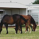 Grazing Horses by R&PChristianDesign &Photography