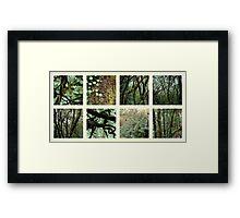 Alpine Rainforest Framed Print