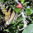 butterfly in the sun by LoreLeft27