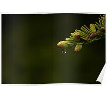 Natures Tears Poster