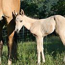 Baby Magnum quarter horse by SKNickel