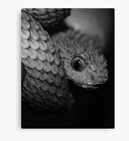 Gray Scale Canvas Print