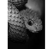 Gray Scale Photographic Print
