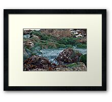 ocean seaweed on rocks Framed Print