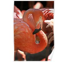 Figure Eight in Pink Poster