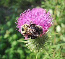 Bumble Bee by Scott Hogg