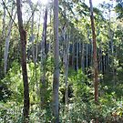 Down in the Valley, Warrimoo in the Blue Mountains of NSW by Catherine Davis