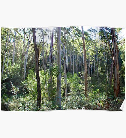 Down in the Valley, Warrimoo in the Blue Mountains of NSW Poster