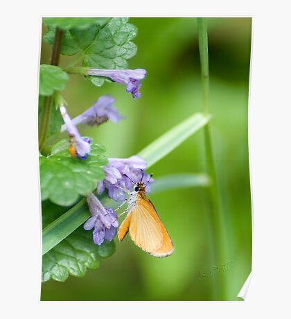 Garden Moth Poster