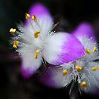 macro flower by Adrian Ross-New