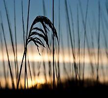 February dawn by Josh Spacagna