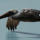 Pelican Aloft, Blue Sea by Jane McDougall