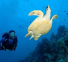 Sea turtle and friend by Fiona Ayerst