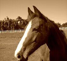 Lovely Horse  by Jennifer Rogers