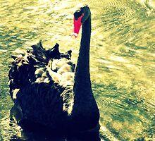 Lonley Goose  by Jennifer Rogers