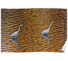 Egrets on Gold Poster