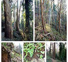 Sutro Forest by Barbara Wyeth