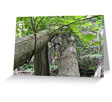 Naturescape 18 Greeting Card