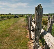 The Good Earth Vineyard by Marilyn Cornwell