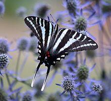 Zebra in Purple by Eileen McVey