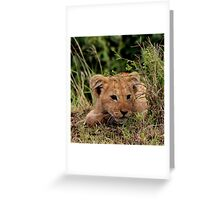 Out of Africa - Peek A Boo, I See You Greeting Card