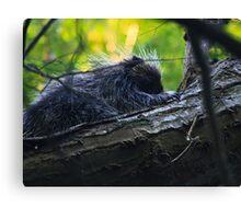 Little Porcupine Canvas Print