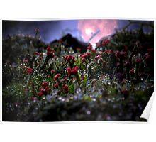 Alien Moon Rise - Parmotrema 648 Poster