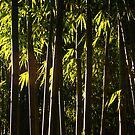 Bamboo Forest twilight by Rene Fuller